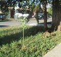 Euphorbia G 4080.jpg